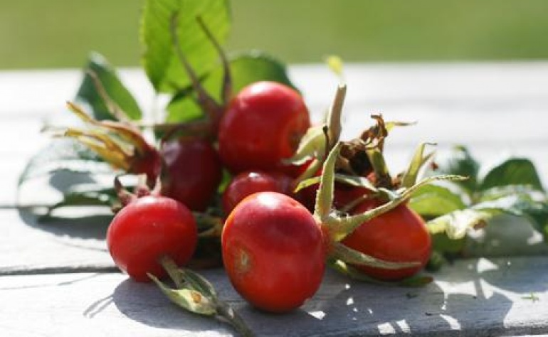 Natural beauty hacks with rosehip fruit oil
